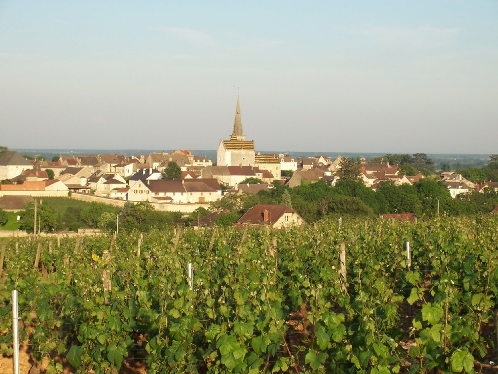 View of Meursault from vineyards
