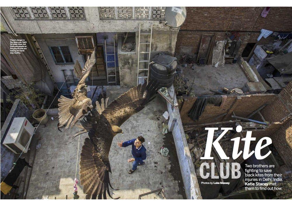 BBC Wildlife January 2017 black kites feature.jpg