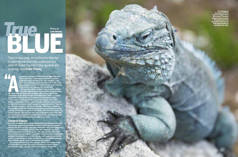 BBC Wildlife September 2017 Blue iguanas.jpg