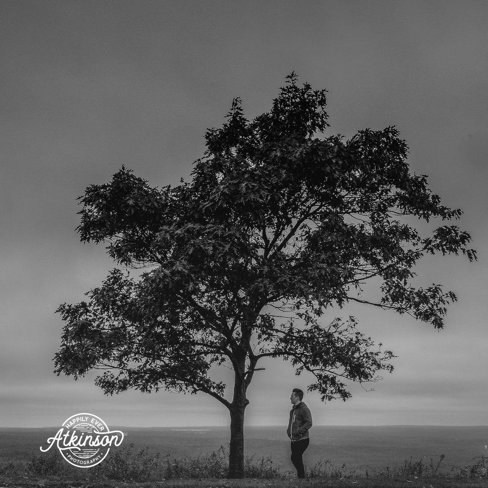 Poconos Tree Photographer.jpg