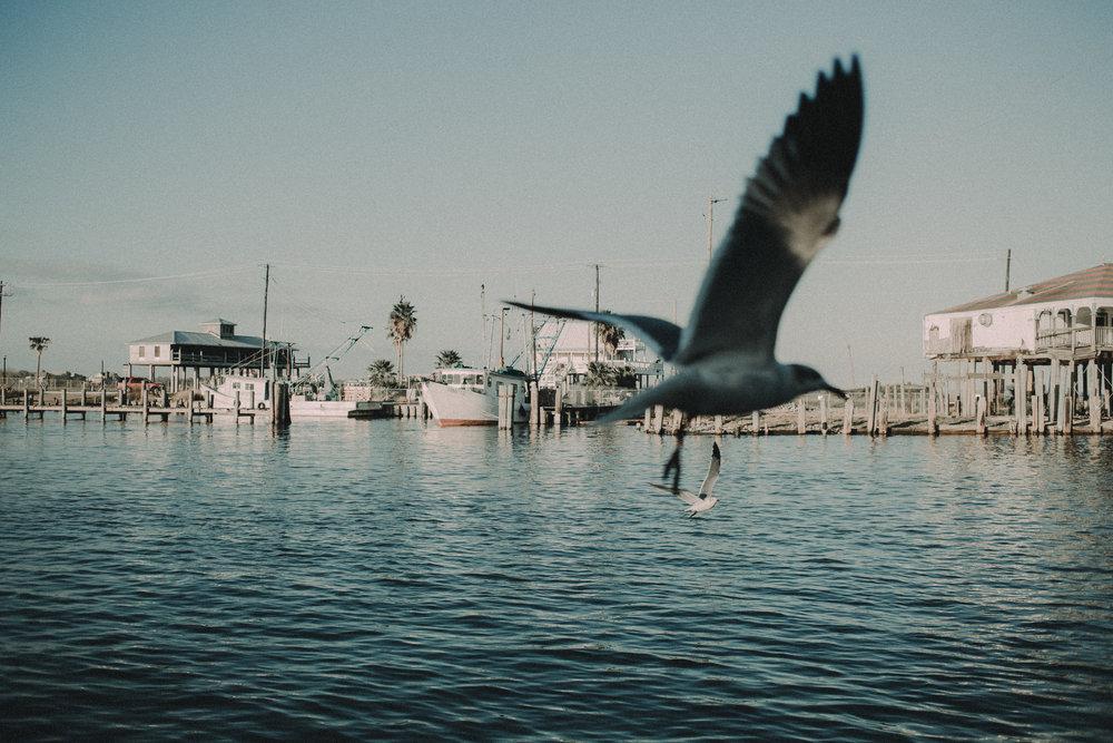01/07/16 - FLORIDA, U.S.A.
