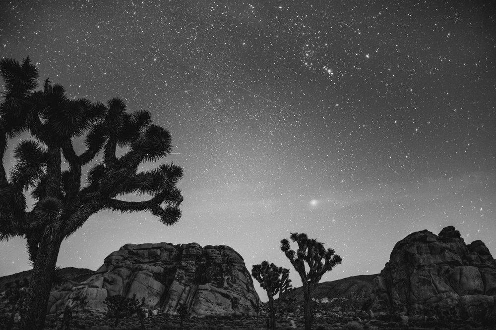 01/28/16 - JOSHUA TREE NATIONAL PARK, CALIFORNIA, U.S.A.