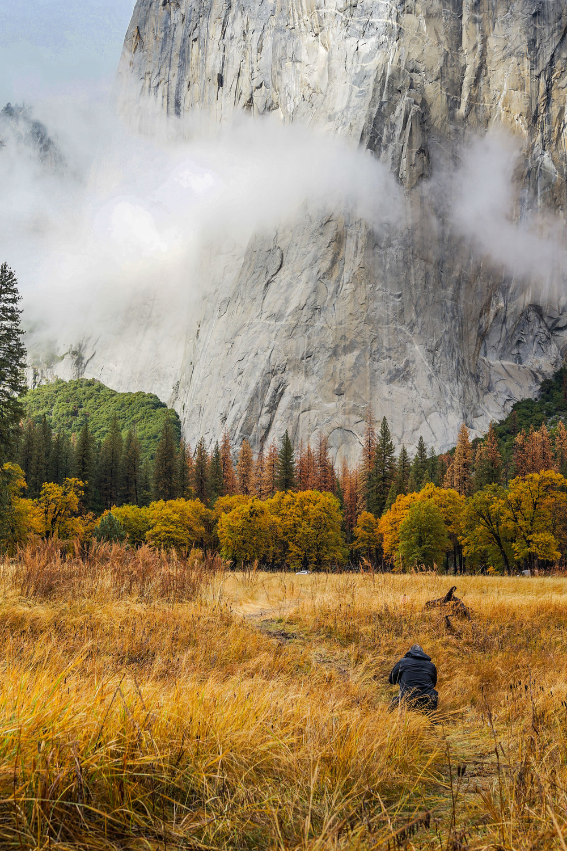 Yosemite Meadow , Mariposa, California