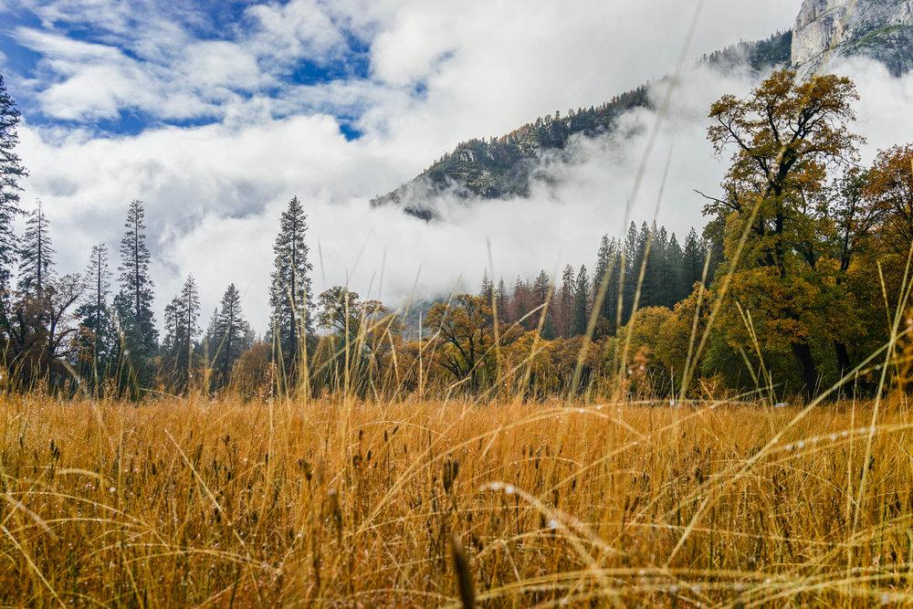 El Capitan Meadow, Yosemite National Park