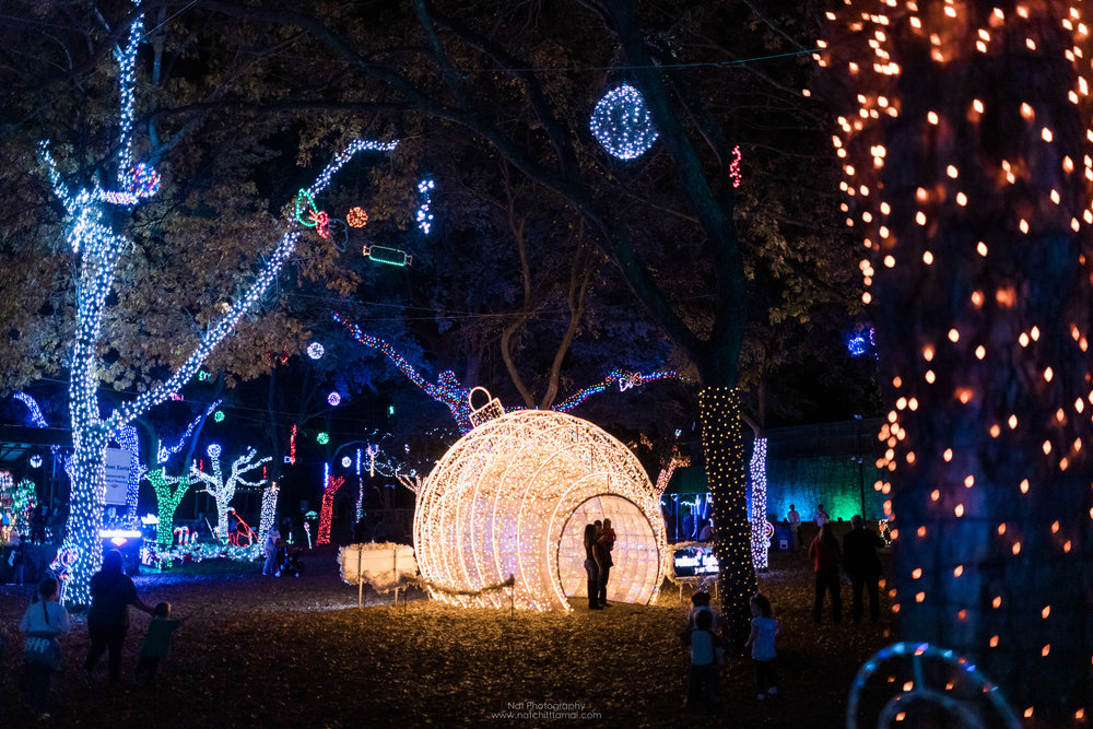 Dallas Zoo Light 2018 Nat Photography