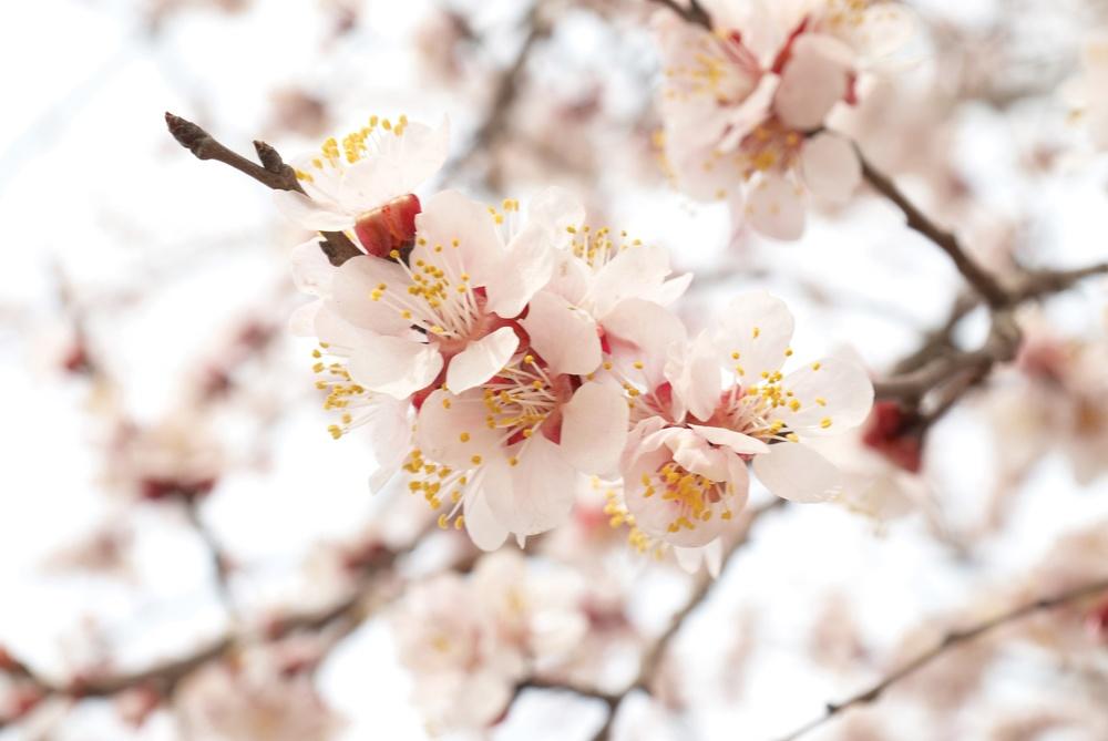 Passione   Lugana   freschezza floreale e aroma di mandorla