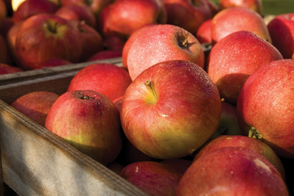 Leidenschaft   Lugana Superiore   Lang im Abgang und elegant, angenehme Gewürznoten, frischer Apfel und Zitrusfruchtnoten