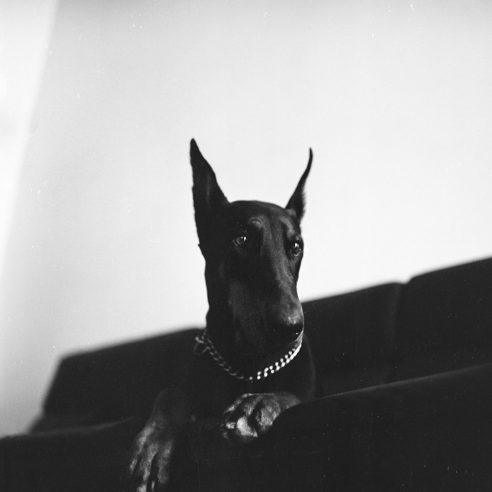 FallowLand_Pinscher_coverart.JPG