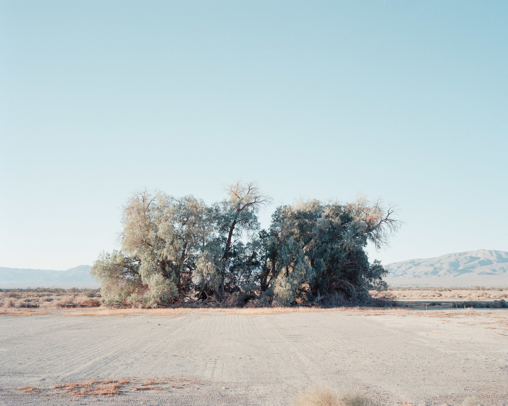 09_tree 2-.jpg