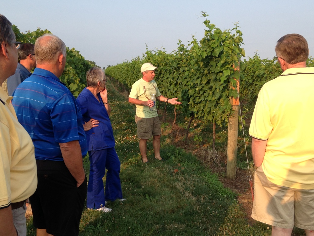 Vineyard tours.JPG