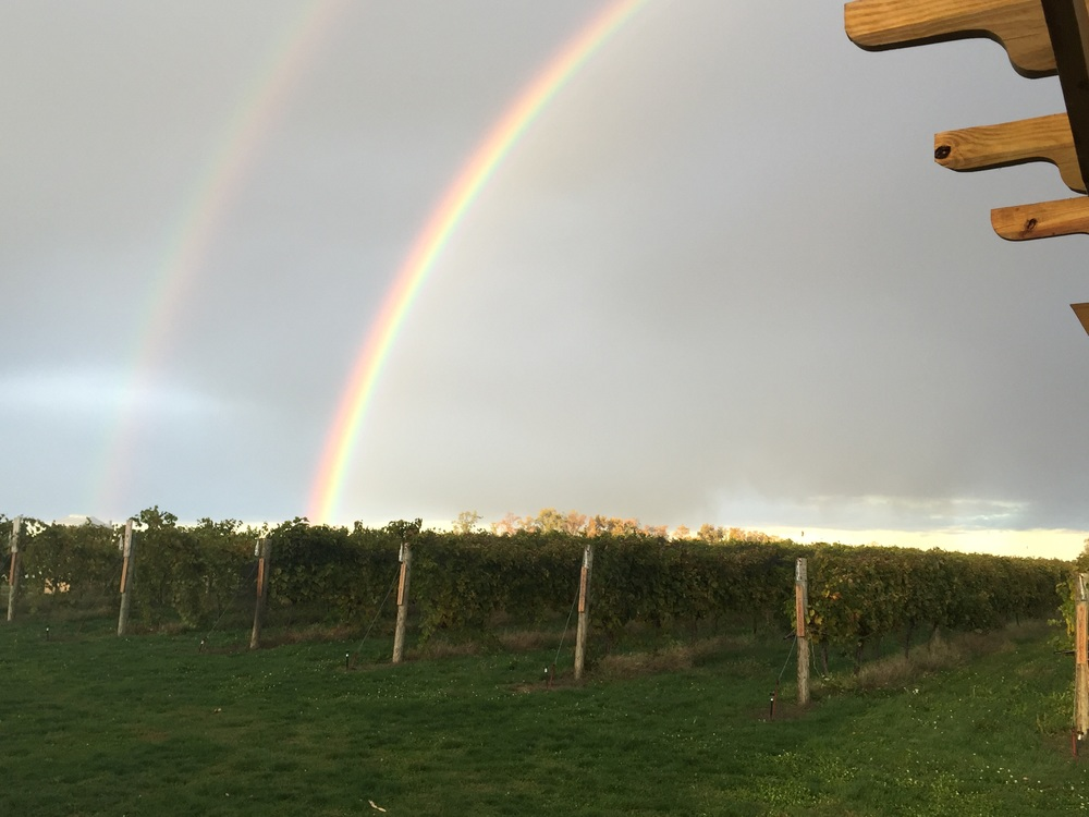 The day we finished harvest, this rainbow appeared over our vineyards.  I take it as a good omen for the 2015 vintage.