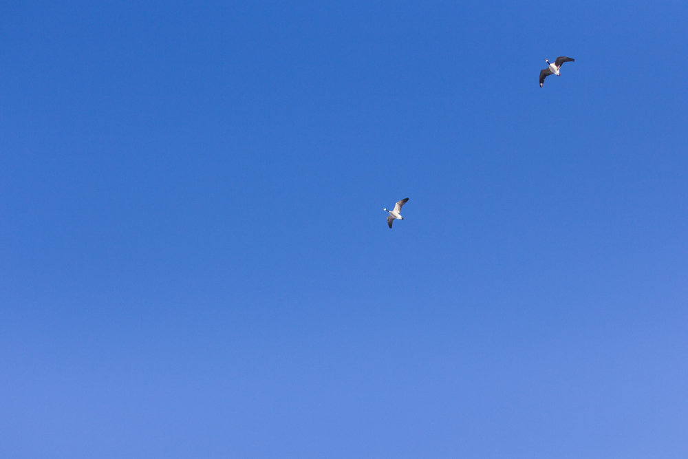 birds flying in clear Colorado skies