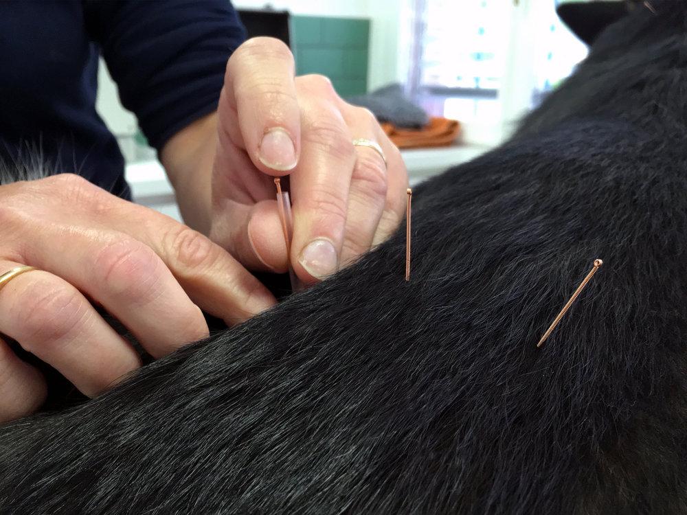 Acupuncture Casavet.jpg