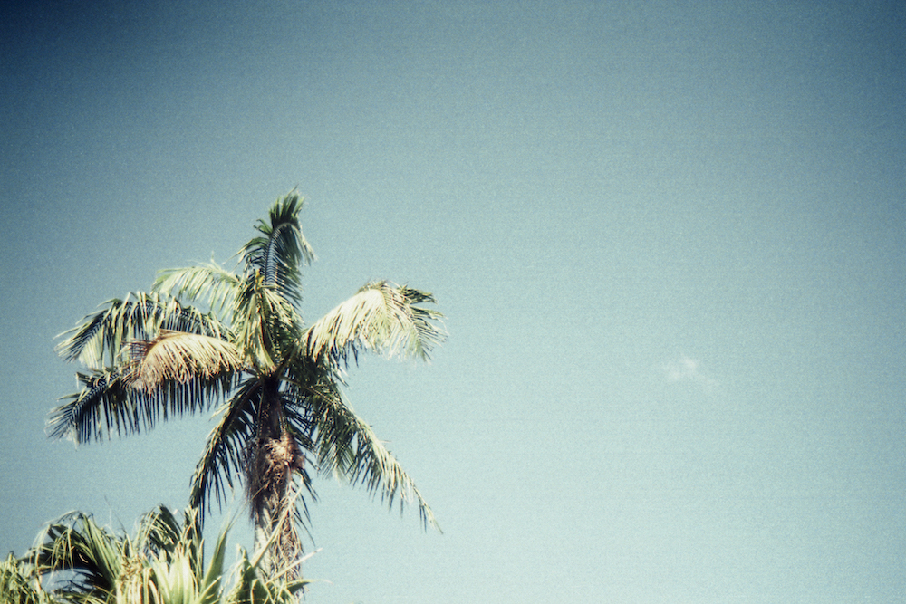 Palm Tree UO Blog Oil & Grain