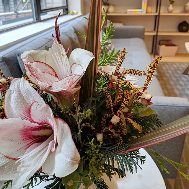 Baby it's cold outside 🧣❄️ Let us bring you blooms on the regular! Use code SPRUCE on our website for 10% off subscriptions 🌿  #nycweeklyflowers #officeflowers #winterinnyc #cedar #uprootedflowertruck #uprootednyc #flowertruck #zenoffice #nycoffice #nycofficespace #frontdesklife #nycflorist