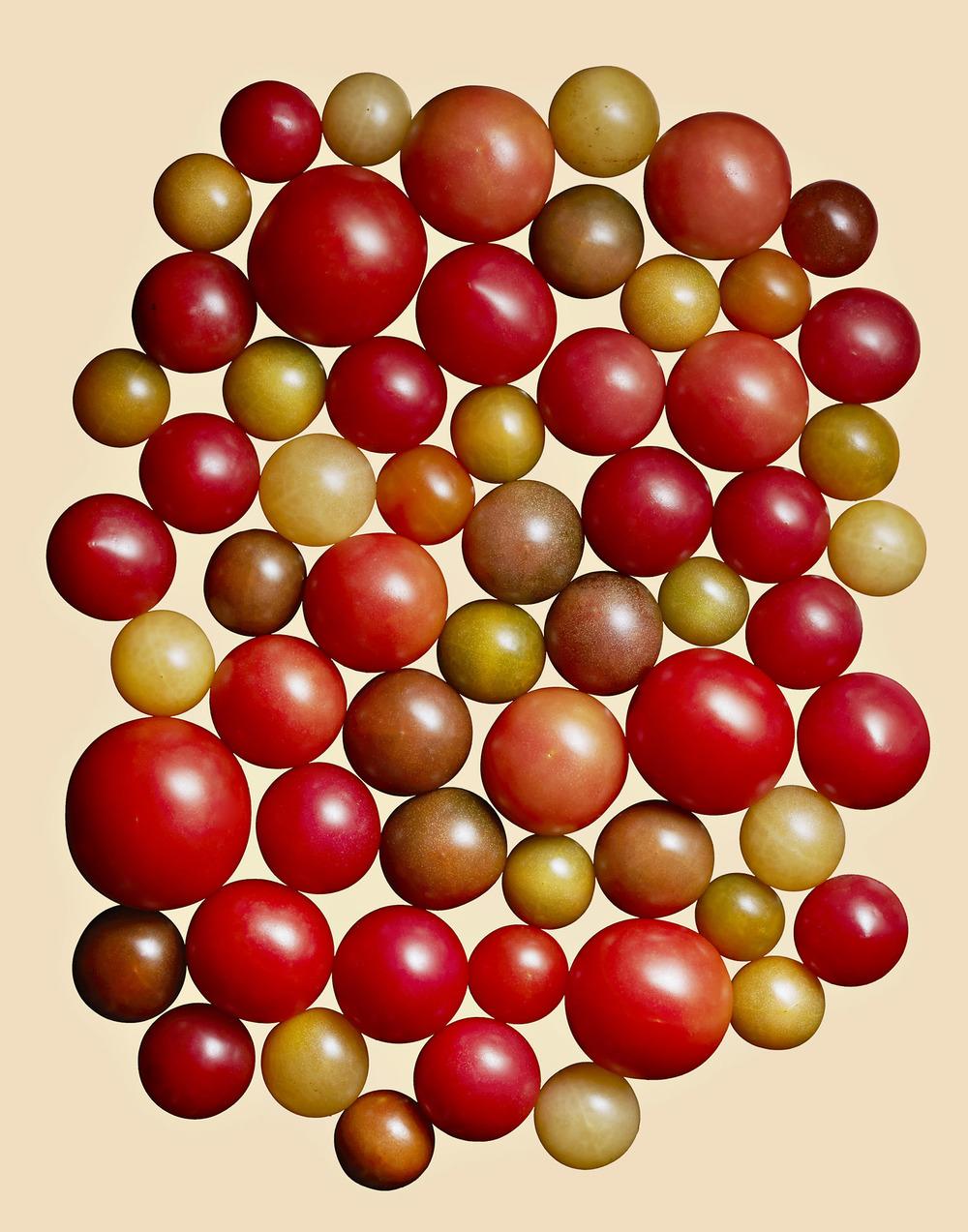 Heirloom Baby Tomatoes