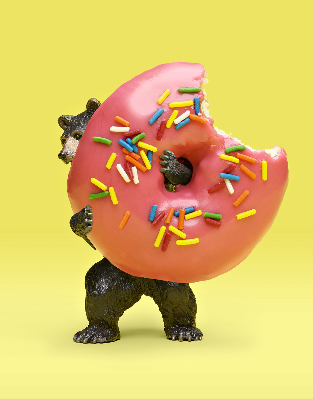 Tiny Bear holding a Giant Donut - Bear Baiting Illustration