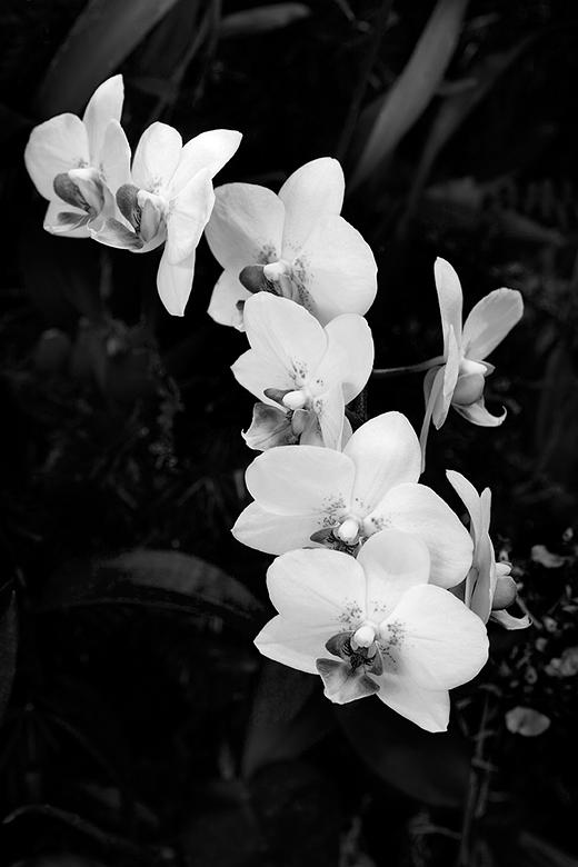Orchid - Daniel Stowe Botanical Garden
