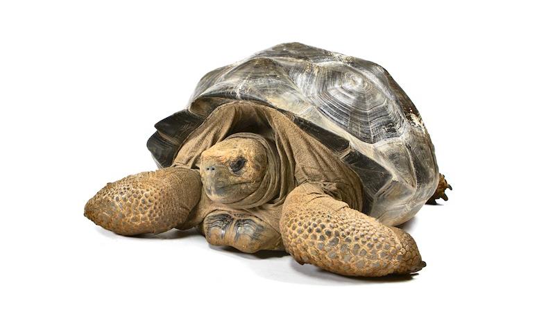 Galapagos Tortoise Membership