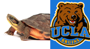 The TC works with Dr. Brad Shaffer at UCLA on the genetics of many of the TC's turtle species.