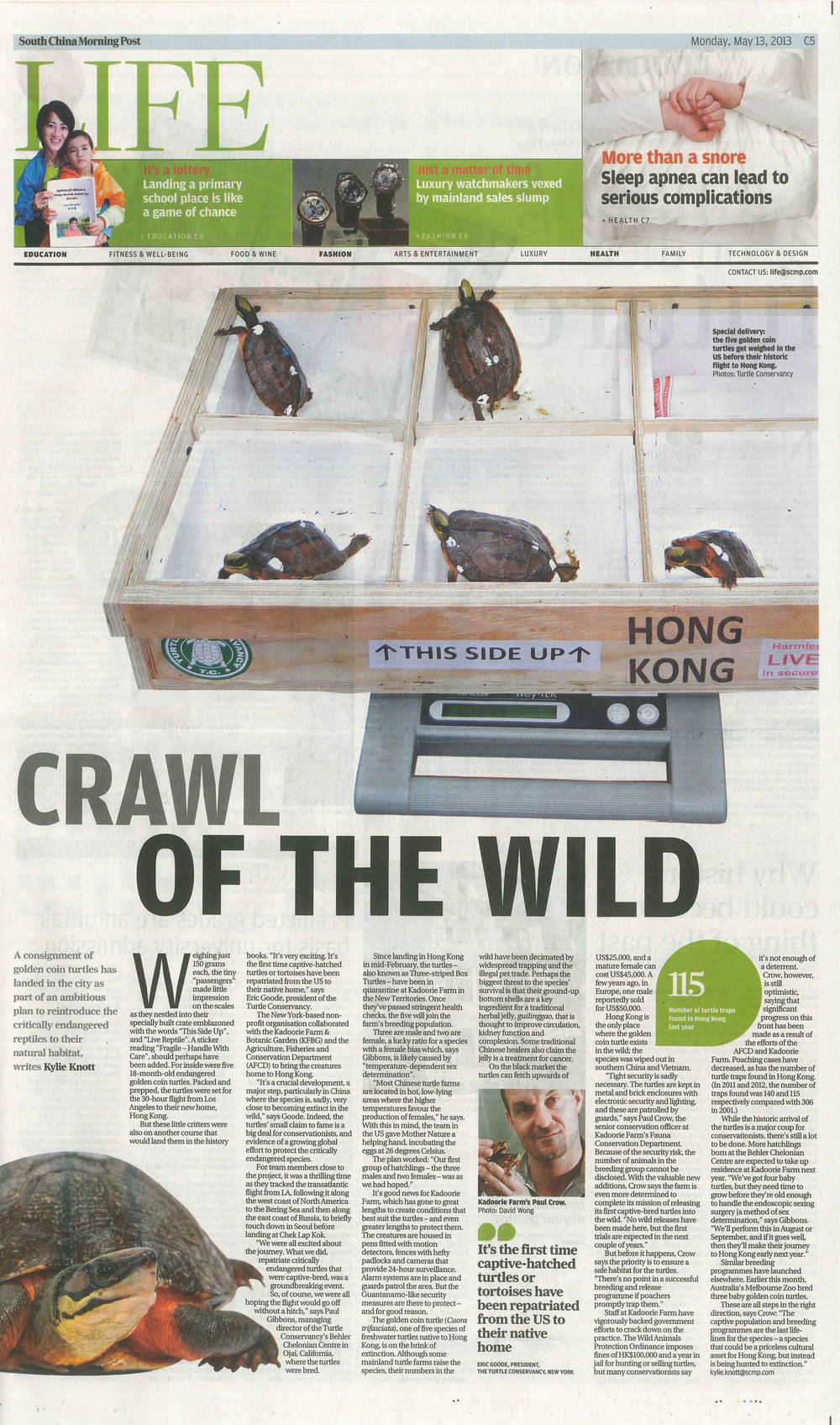This article publicized the first ever reintroduction of a turtle to its native range from outside the host country. Our goal is to send all future offspring back to Kadoorie farms to aid their efforts.