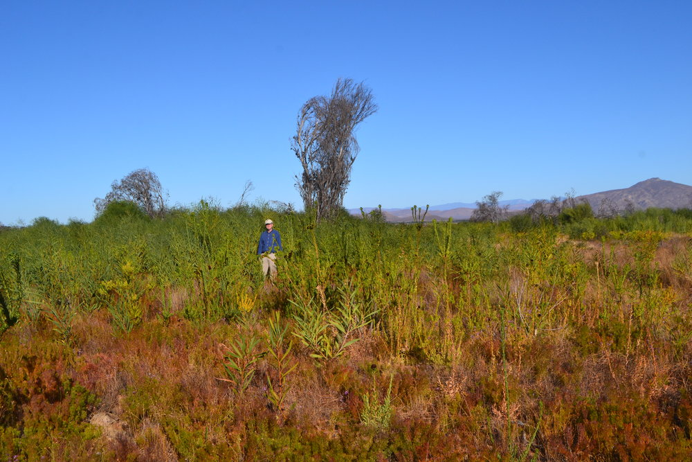 Turtle Conservancy Chief Scientist Ross Kiester in an area full of invading Australian Acacia.