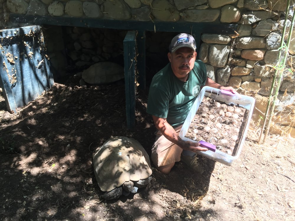 Armando Jimenez Showing Some of the Eggs