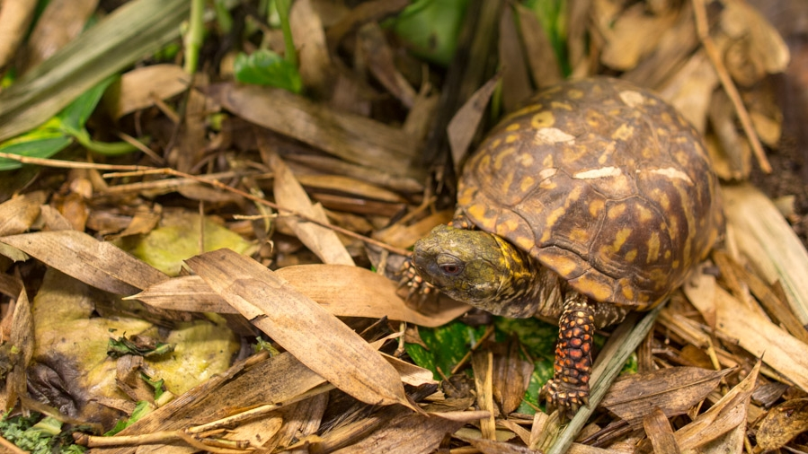 Turtle Conservancy — Conservation Center