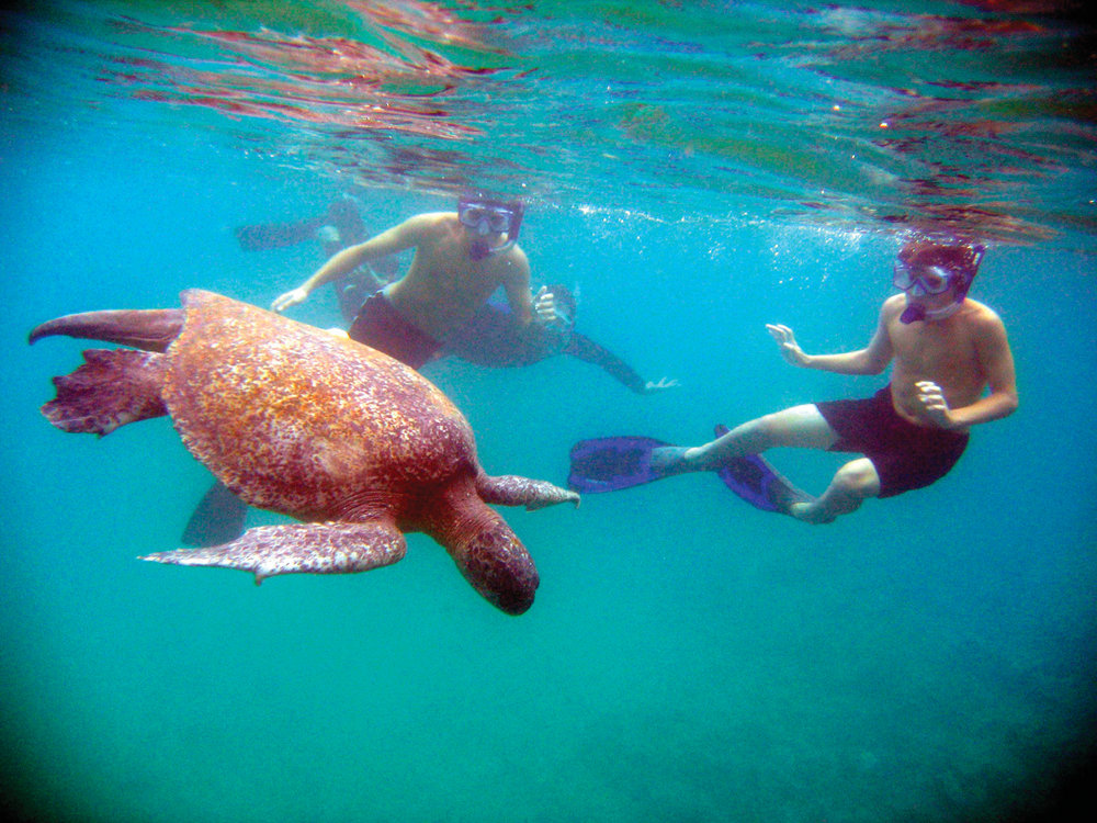 Guests with sea turtle