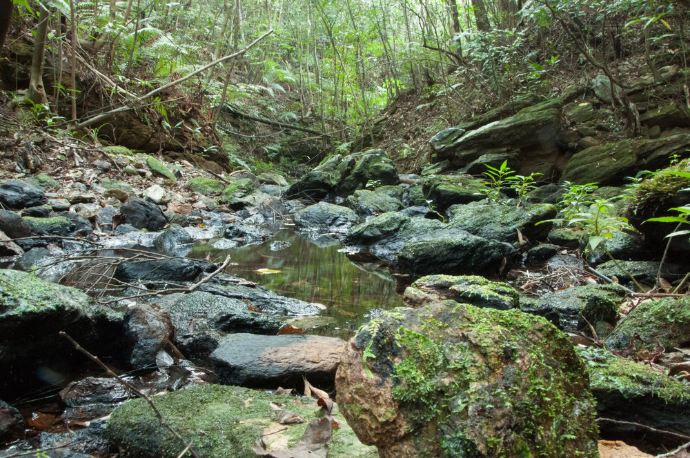 Habitat of Okinawa leaf turtle is mainly closed because of the dense vegetation. Leaf litter and rock caves compose the jungle environment often crossed by small creek.