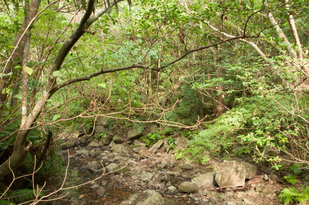 habitat5.jpg