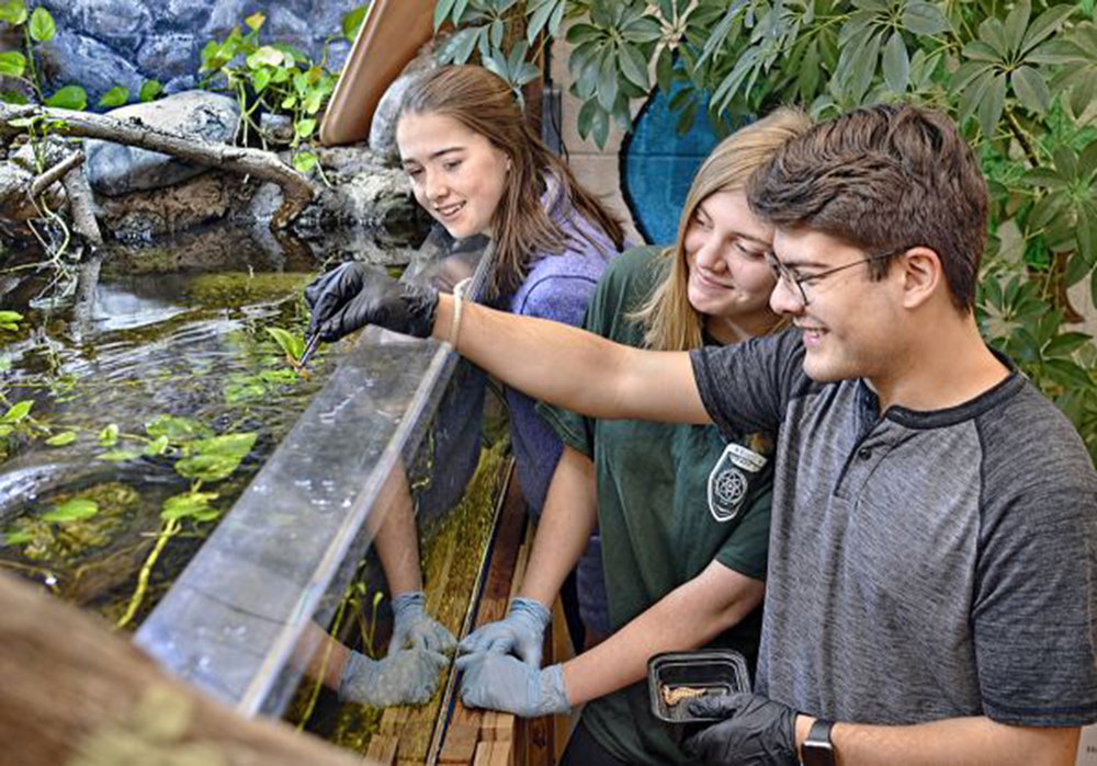Feeding the animals in the MOHS habitat room are Kathleen Wooster, Jessica Palmisano, and David Vega.
