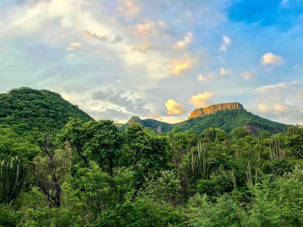 1,000 Acre San Pablo Tortoise Preserve