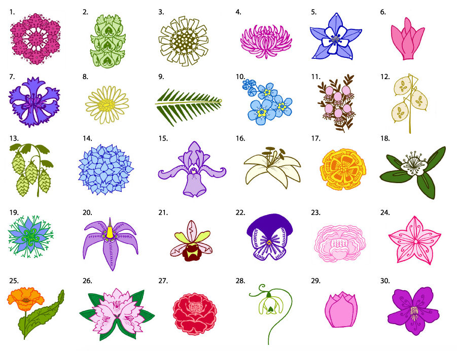 The Language Of Flowers What Different Types Of Flowers Actually