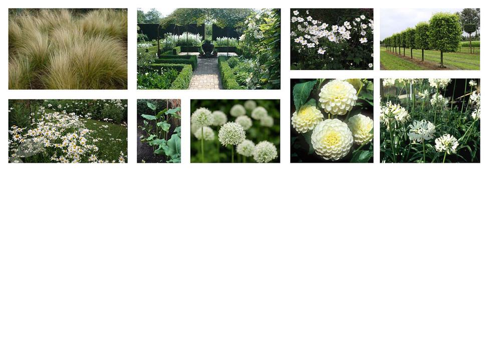 plantplan2.jpg