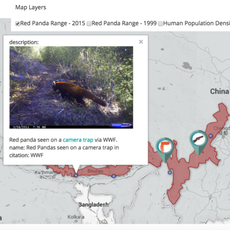 Red Panda Population Data Visualization - This data visualization project, illustrates the range and conservation issues concerning the red panda species.