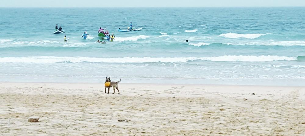Beach - Dog.jpg