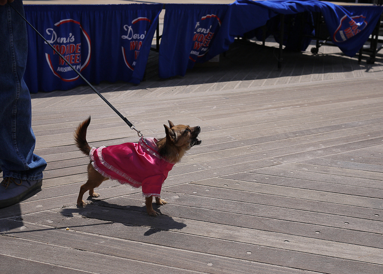 20140620114311-barking_tiny_pink_costume.jpg