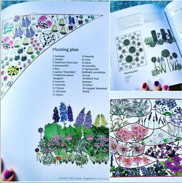 My published illustrations inside the book