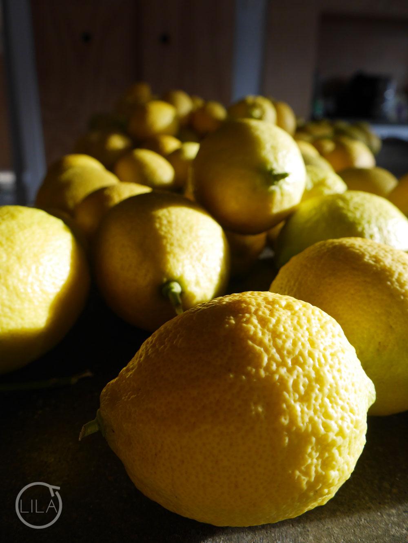 136 lemons some unripe