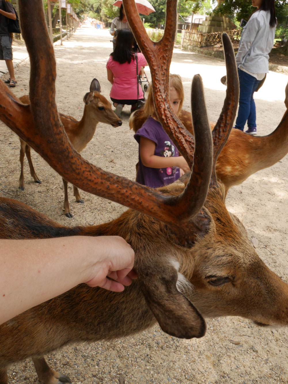 EAR-SCRATCH-DEER.jpg