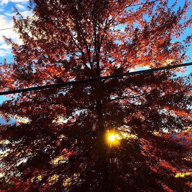 Fall Sunset Upstate NY  #upstateny #fall #fallcolors #inspiration #fiery #sunset #iloveny #dogwalking