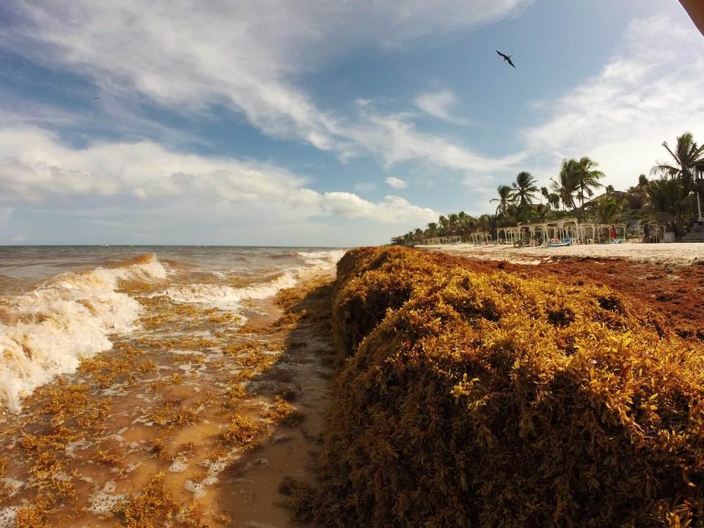 Seaweed Beach, Tulum, Mexico