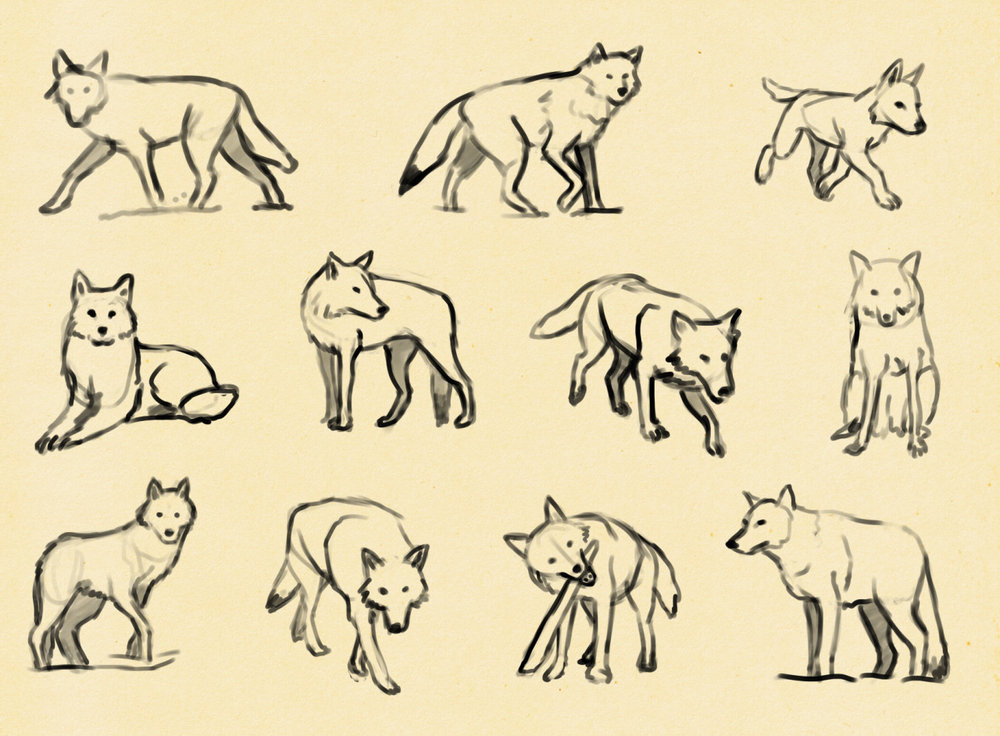 Trying to figure out how wolves work.