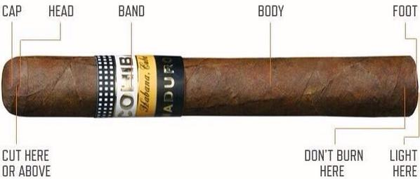 anatomy of a cigar