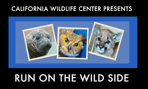California Wild Life Presents Run on the Wild Side