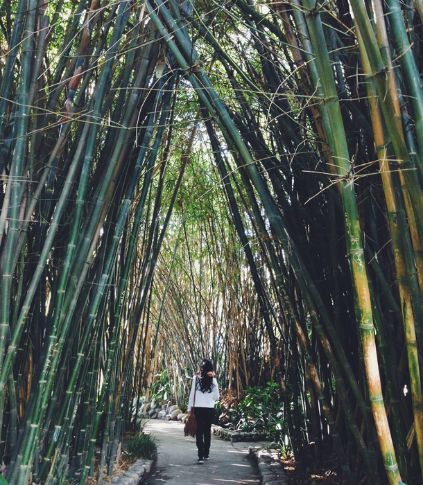 Bamboo Garden | The Huntington Library / Brourbon and Goose Town Talk