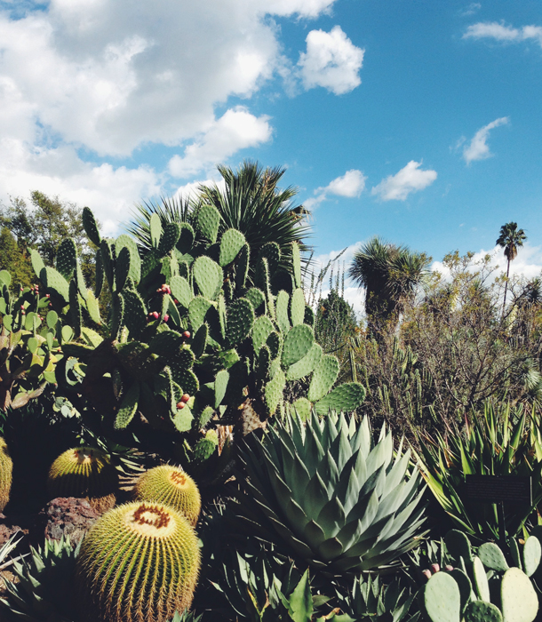Desert Garden | The Huntington Library / Brourbon and Goose Town Talk