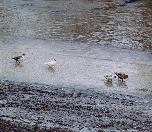 Adventure: Birds on Parade / LA River / Bourbon and Goose
