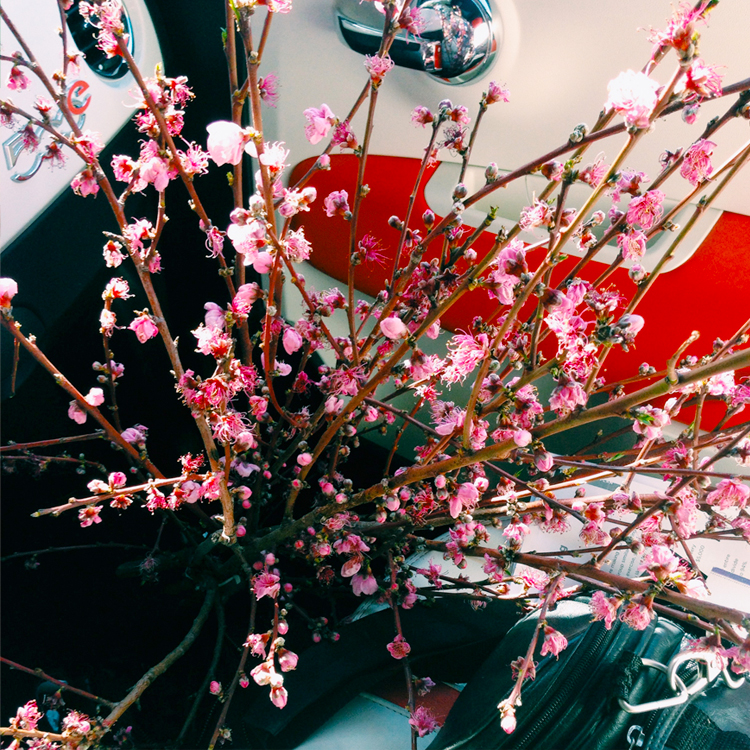 Peach Blossoms + Fiat 500e heading to the Studio / Bourbon and Goose